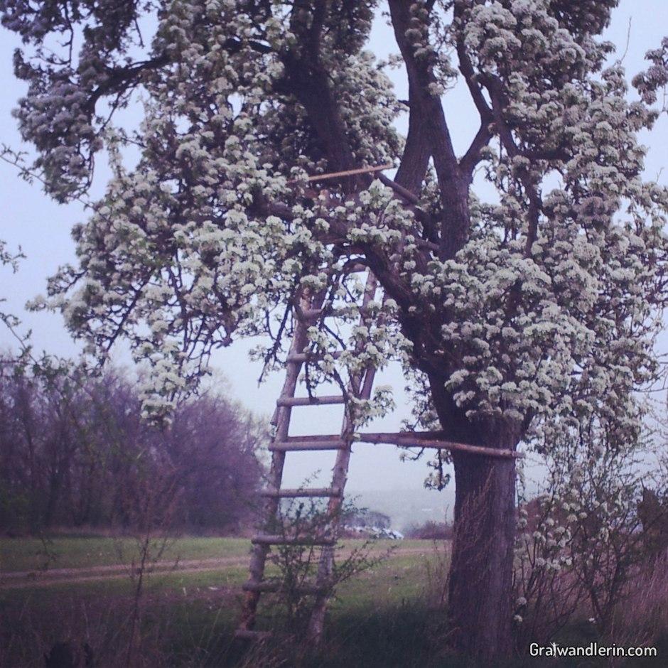 Hochstand im Blütenrausch